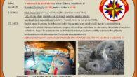 SRAZ: V sobotu 23.11.2019 v 8:50 u církve SŽ Brno, Nové Sady 37 NÁVRAT: Náměstí Svobody v 17:00, nebo u církve v 17:30 S SEBOU: Věci na plavání (plavky, ručník, […]